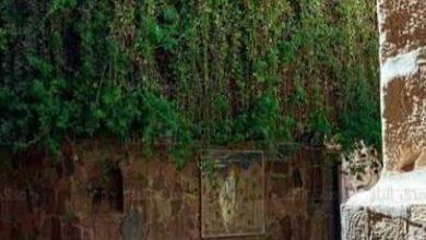 صورة أين ناجي موسي ربه.. تمر السنين وتظل شجرة العليقة المقدسة موجودة في سيناء